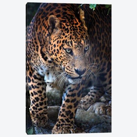Gepard Canvas Print #AKM301} by Nikita Abakumov Canvas Print