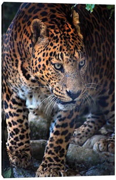 Gepard Canvas Art Print