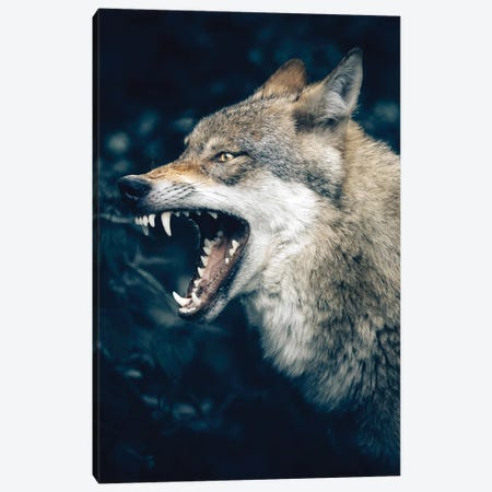 Wolf Roar Canvas Print #AKM302} by Nikita Abakumov Canvas Print