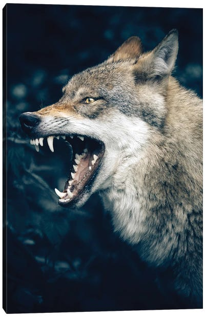 Wolf Roar Canvas Art Print