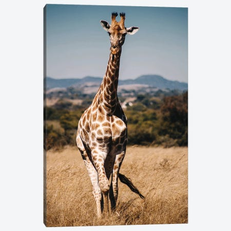Giraffe II Canvas Print #AKM305} by Nikita Abakumov Canvas Art