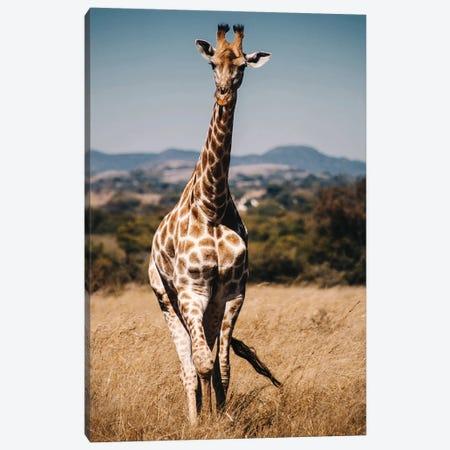 Giraffe II Canvas Print #AKM305} by Nikita Abakumov Canvas Art