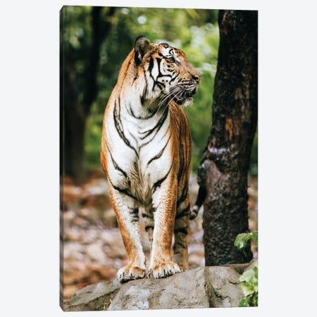 The Tiger Canvas Print #AKM306} by Nikita Abakumov Canvas Wall Art