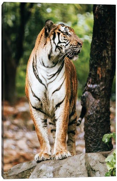 The Tiger Canvas Art Print