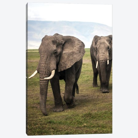 Elephants Canvas Print #AKM307} by Nikita Abakumov Canvas Artwork
