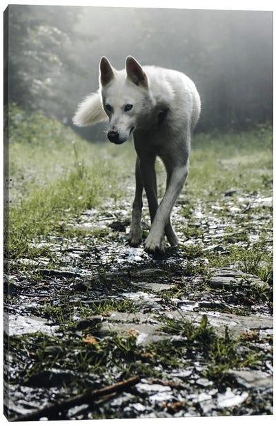 White Dog Canvas Art Print