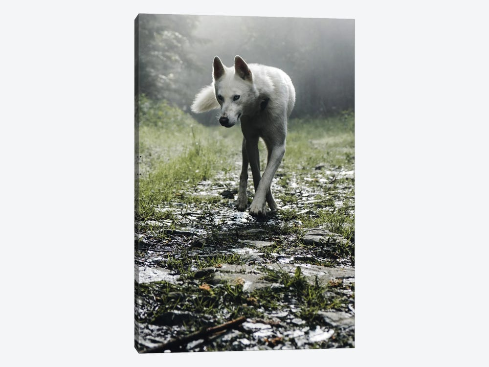 White Dog 1-piece Canvas Wall Art