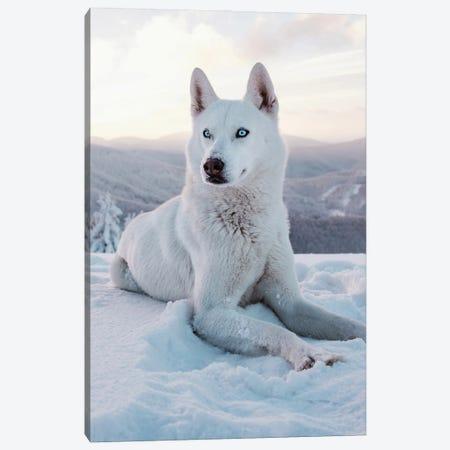 Snow Dog I Canvas Print #AKM310} by Nikita Abakumov Canvas Artwork