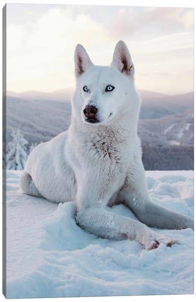 Snow Dog I Canvas Art Print