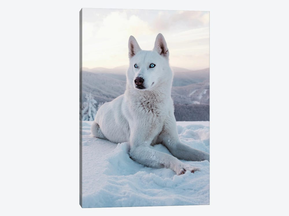 Snow Dog I by Nikita Abakumov 1-piece Canvas Art
