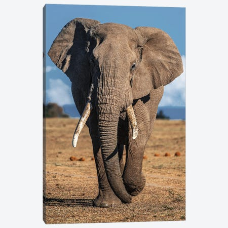 Elephant Canvas Print #AKM311} by Nikita Abakumov Canvas Artwork