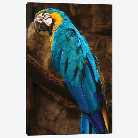 Parrot Blue Canvas Print #AKM314} by Nikita Abakumov Canvas Art Print