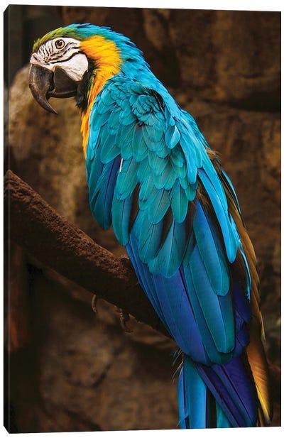 Parrot Blue Canvas Art Print
