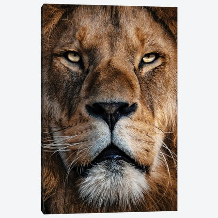 Lion Canvas Print #AKM316} by Nikita Abakumov Canvas Art Print