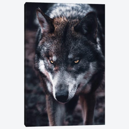 Wolf Hunts Canvas Print #AKM320} by Nikita Abakumov Art Print