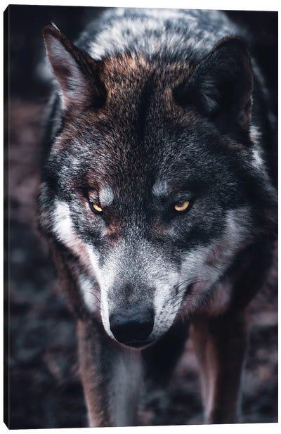 Wolf Hunts Canvas Art Print