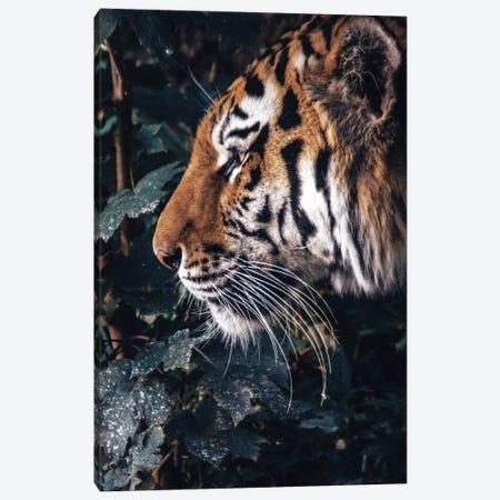 Tiger Profile Canvas Print #AKM322} by Nikita Abakumov Canvas Art Print