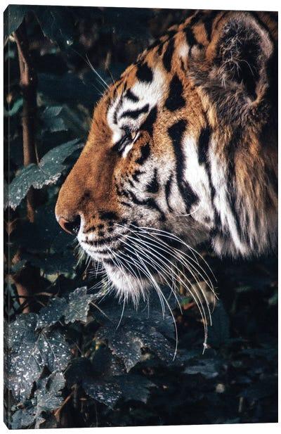 Tiger Profile Canvas Art Print
