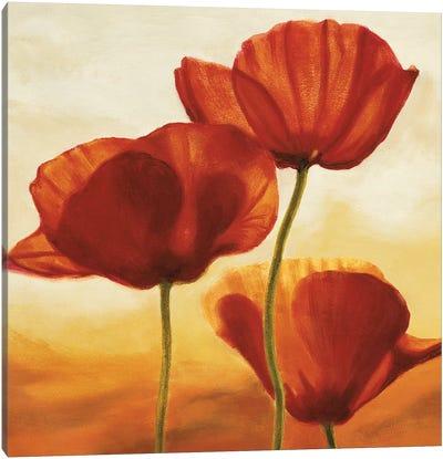 Poppies in Sunlight I Canvas Art Print