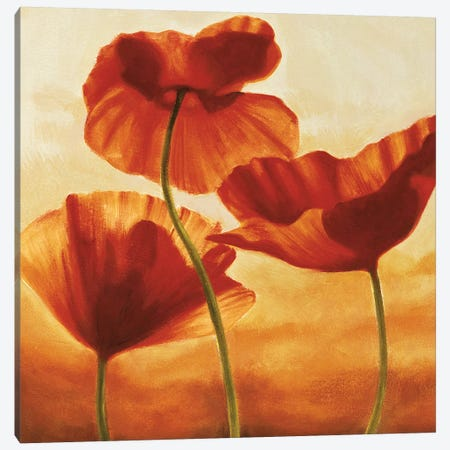 Poppies in Sunlight II Canvas Print #AKN3} by Andrea Kahn Canvas Print