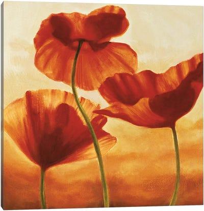 Poppies in Sunlight II Canvas Art Print