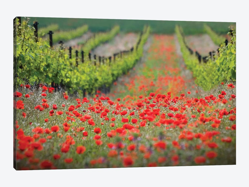 Red District by Ales Komovec 1-piece Canvas Wall Art