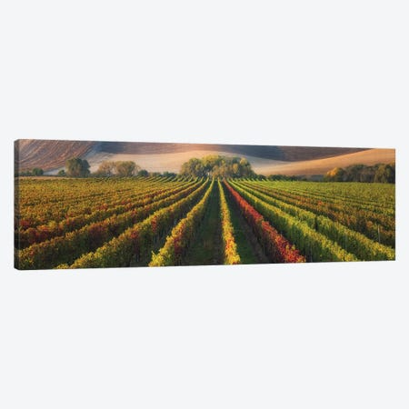 Vineyard In Autumn 3-Piece Canvas #AKO4} by Ales Komovec Canvas Art Print