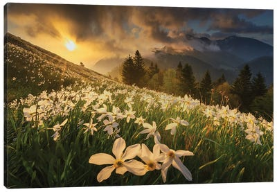 White Carpet Canvas Art Print