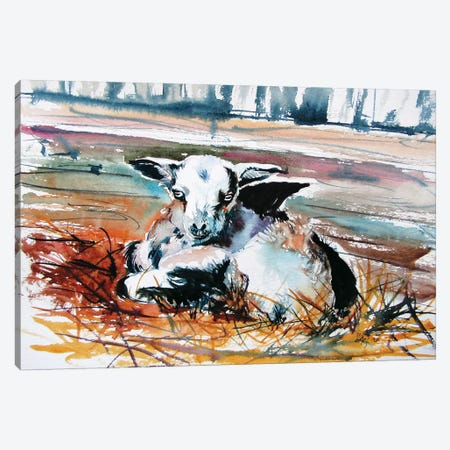 Baby Goat Canvas Print #AKV139} by Anna Brigitta Kovacs Canvas Wall Art