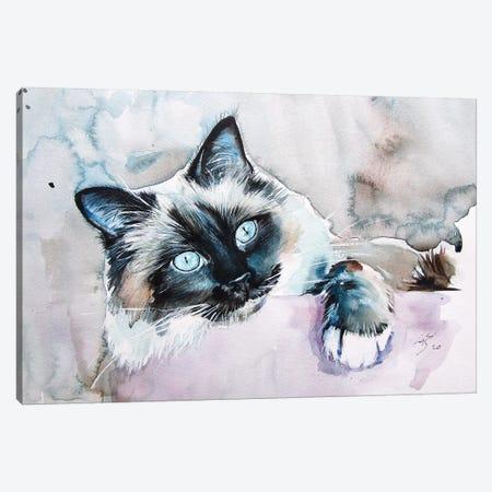 Playing Cat II Canvas Print #AKV152} by Anna Brigitta Kovacs Canvas Artwork
