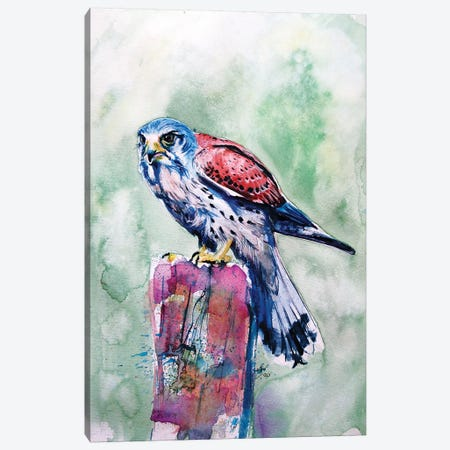 Kestrel Canvas Print #AKV153} by Anna Brigitta Kovacs Canvas Art
