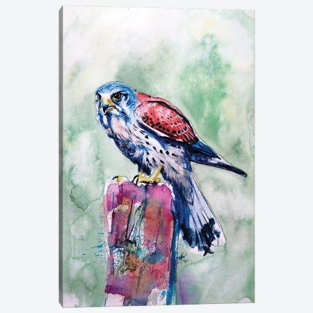 Kestrel Canvas Print #AKV153} by Anna Brigitta Kovacs Canvas Art
