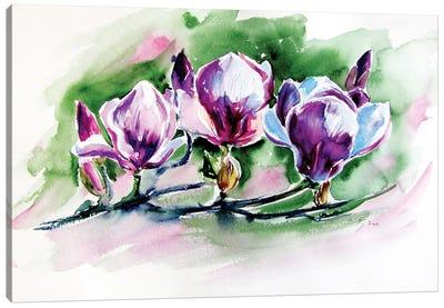 Magnolia Tree Canvas Art Print