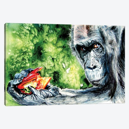Eating Chimpanzee Canvas Print #AKV195} by Anna Brigitta Kovacs Canvas Art Print