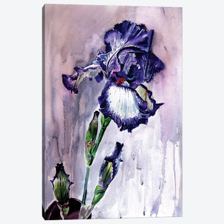 Purple Lily Canvas Print #AKV203} by Anna Brigitta Kovacs Canvas Artwork