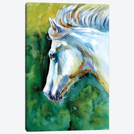 Majestic White Horse Canvas Print #AKV236} by Anna Brigitta Kovacs Canvas Art