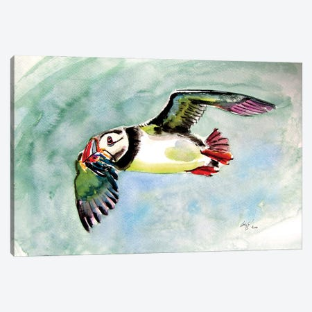 Flying Puffin Canvas Print #AKV240} by Anna Brigitta Kovacs Canvas Wall Art