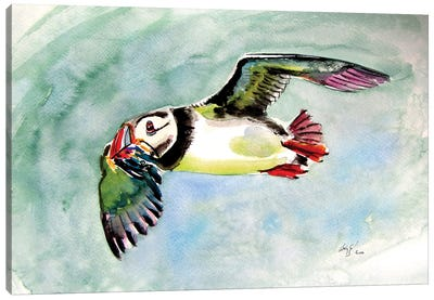 Flying Puffin Canvas Art Print