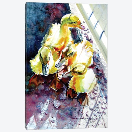 Gosling Canvas Print #AKV246} by Anna Brigitta Kovacs Canvas Art Print