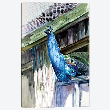 Peacock Canvas Print #AKV275} by Anna Brigitta Kovacs Canvas Wall Art