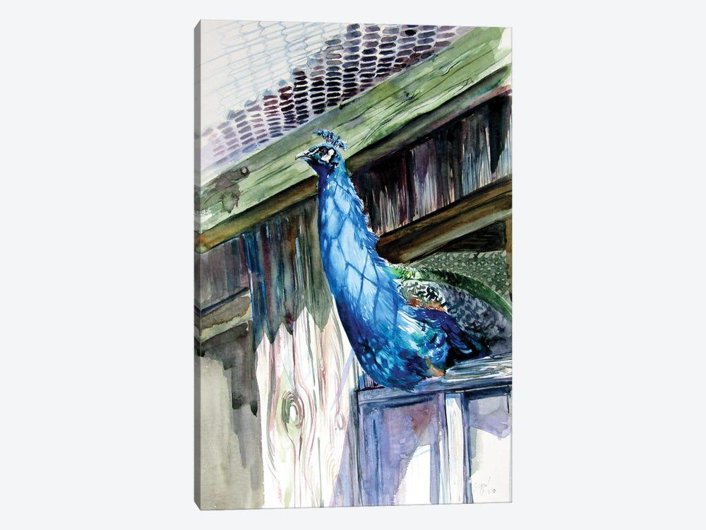 Peacock by Anna Brigitta Kovacs 1-piece Art Print