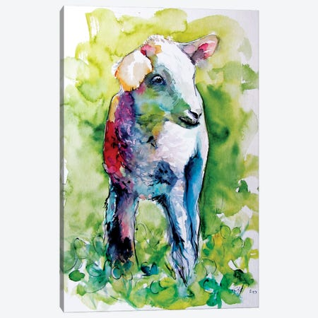 Cute Lamb Canvas Print #AKV290} by Anna Brigitta Kovacs Canvas Art Print