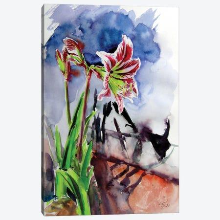 Amaryllis Canvas Print #AKV320} by Anna Brigitta Kovacs Art Print