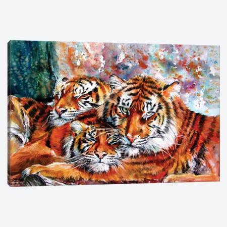 Resting Tigers Canvas Print #AKV354} by Anna Brigitta Kovacs Art Print