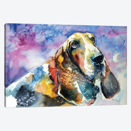 Basset Hound Canvas Print #AKV4} by Anna Brigitta Kovacs Art Print