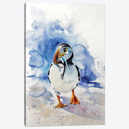 Puffin Canvas Print #AKV70} by Anna Brigitta Kovacs Canvas Print