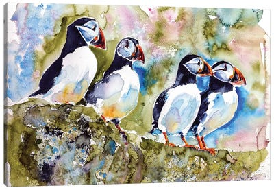 Puffins On Stone Canvas Art Print