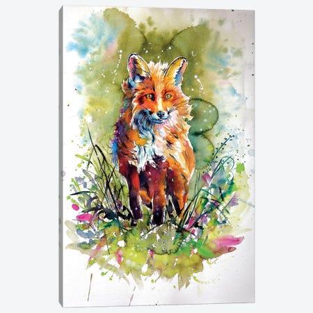 Red Fox In Field Canvas Print #AKV75} by Anna Brigitta Kovacs Canvas Wall Art