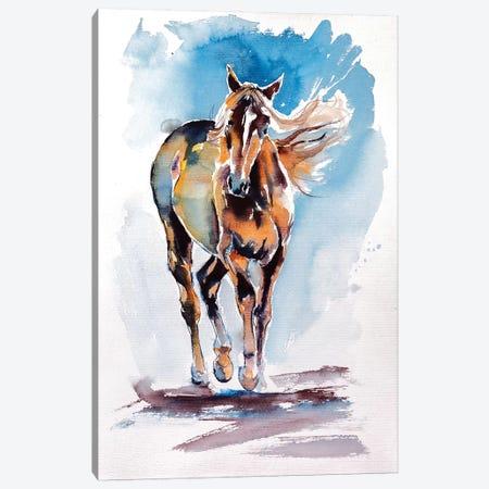 Walking Horse Canvas Print #AKV91} by Anna Brigitta Kovacs Canvas Art Print
