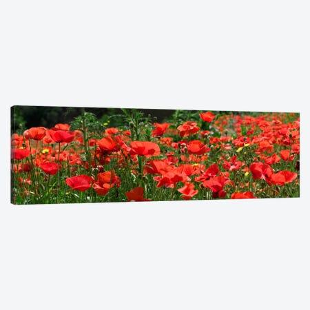 Red Poppy Field, Europe Canvas Print #ALB1} by Albert Lleal Canvas Artwork